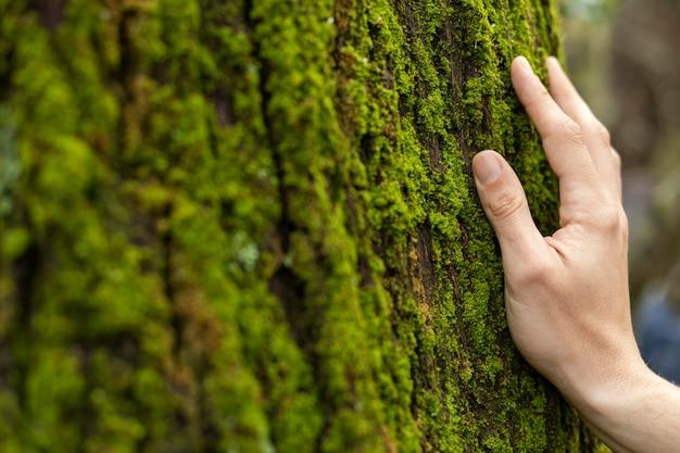 Mão tocando musgo de árvore de perto