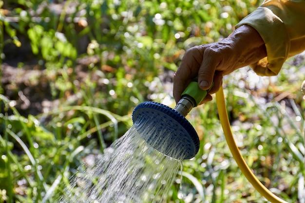 Mão velha despejando plantas de jardim com irrigador closeup