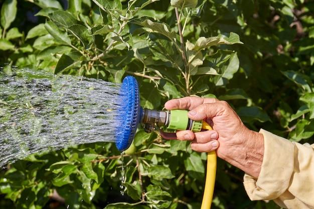 Mão velha segurando o bico da mangueira e borrifando água