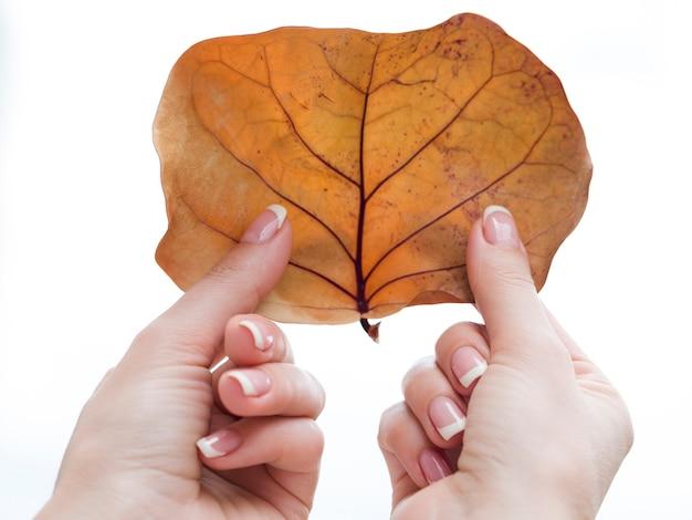 Mãos bem cuidadas, segurando a folha seca