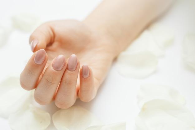 Mãos bonitas com manicure e pétalas de rosa brancas