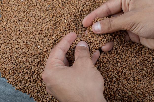 Mãos catalogando trigo sarraceno cru em cinza.