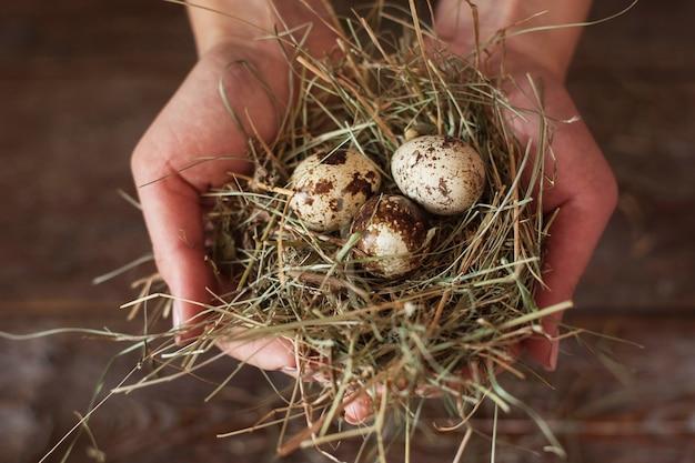 Mãos com ninho e ovos de codorna