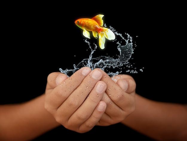 Mãos com peixe e água