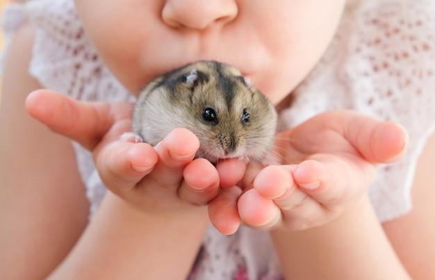 Mãos com um hamster. garota tem um hamster nas mãos dela.