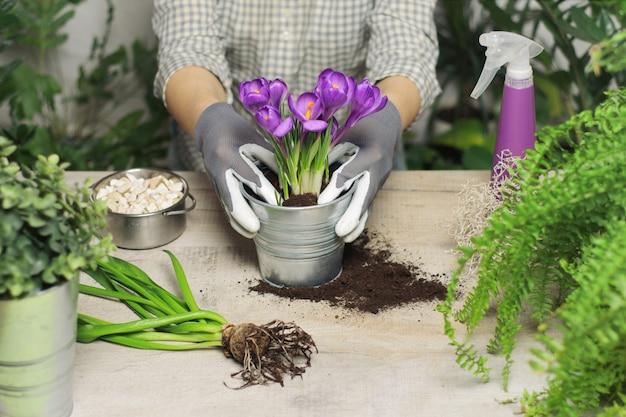 Mãos das mulheres que que plantam a flor no potenciômetro.