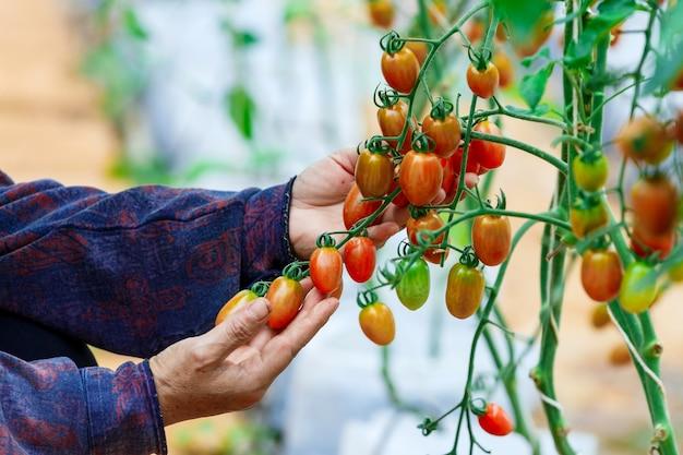 Mãos de agricultores segurando legumes frescos
