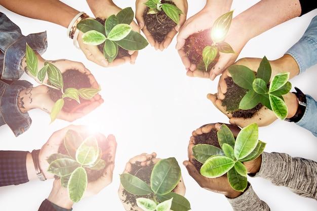 Mãos de ambientalistas pegando plantas na campanha do dia da terra