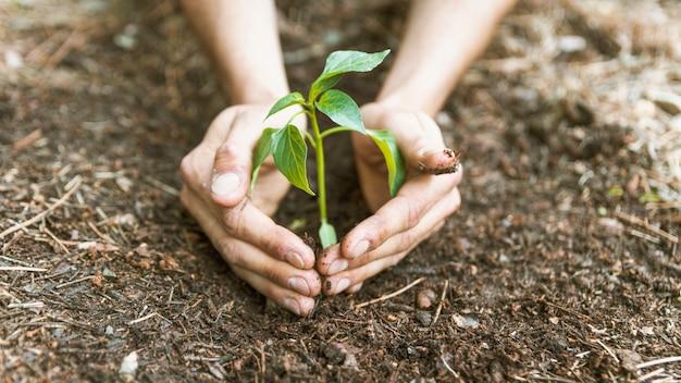 Mãos de colheita salvando o broto