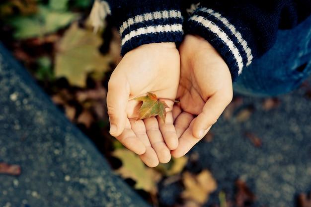Mãos de criança, criança ou mulher segurando uma folha em uma floresta - mostrando uma folha - temporada de outono