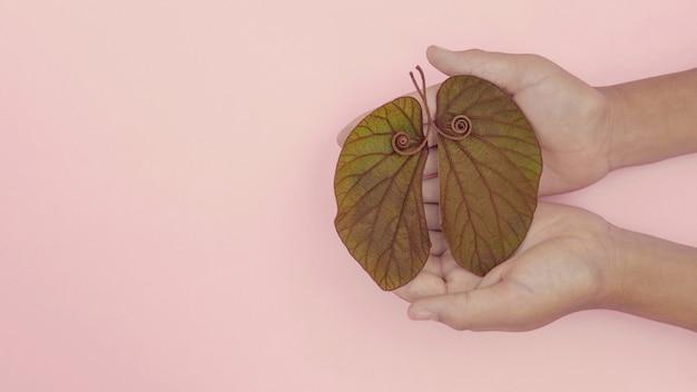 Mãos de criança segurando folhas em forma de pulmão, câncer de pulmão, dia mundial da tuberculose, dia mundial sem tabaco, vírus corona covid-19, poluição do ar ecológica; conceito de doação de órgãos