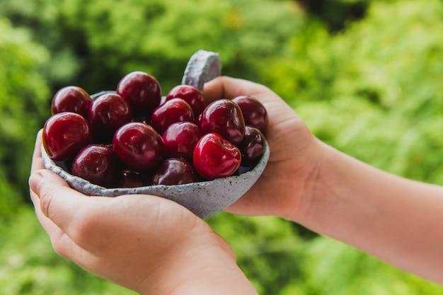 Mãos de crianças com cerejas frescas. verão e colheita conceito