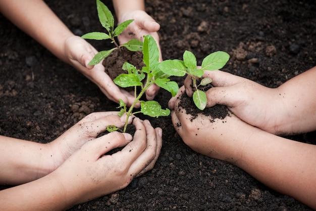 Mãos de crianças plantando árvore jovem em solo preto juntos como conceito de mundo de salvar
