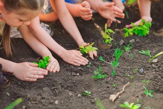 Mãos de crianças plantando árvore jovem em solo preto juntos como o conceito mundial de resgate