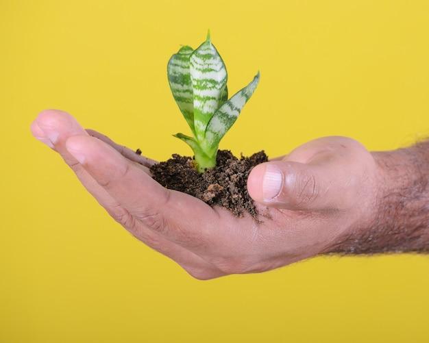 Mãos de homem mostrando uma pequena planta
