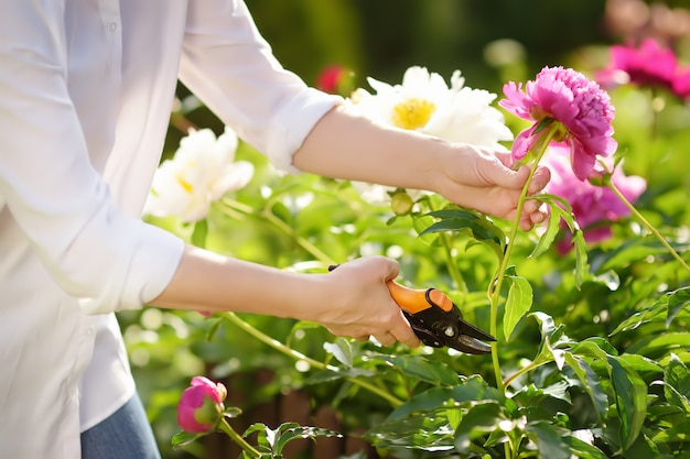 Mãos de jardineiro feminino de meia-idade. mulher que trabalha com o secateur no jardim doméstico no dia de verão.