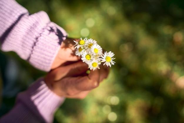 Mãos de menina segurando lindas flores margaridas no fundo da grama desfocada