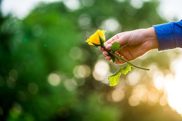 Mãos de menina segurando uma rosa amarela