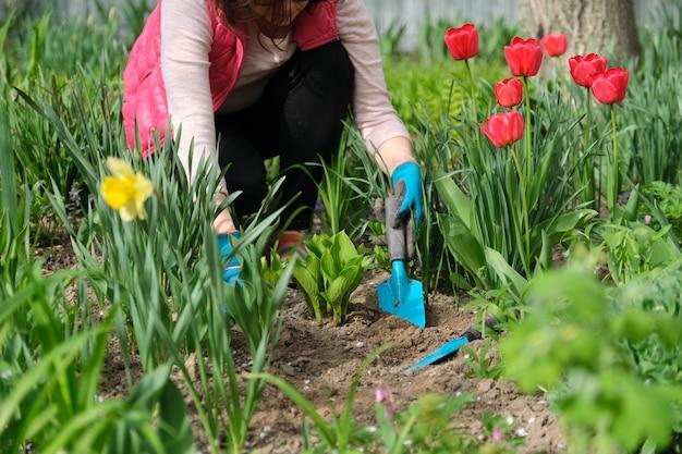 Mãos de mulher com ferramentas de jardim, trabalhando com o solo e cultivando hostas