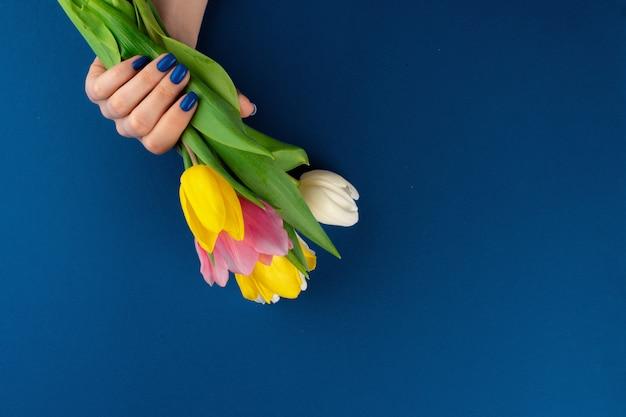 Mãos de mulher com manicure segurando tulipas coloridas sobre fundo azul