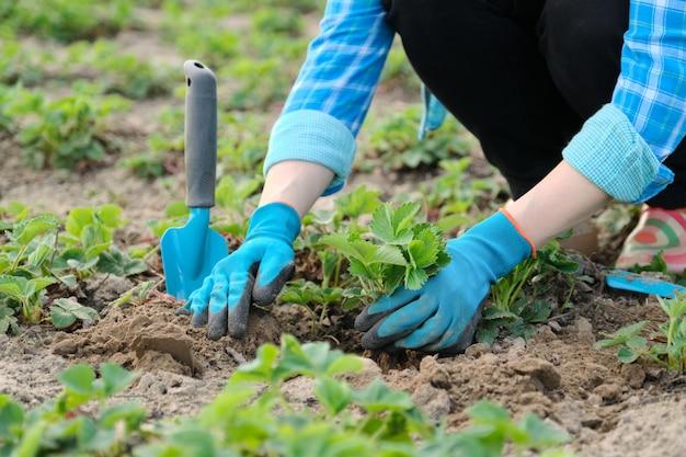 Mãos de mulher em luvas com ferramentas de jardim