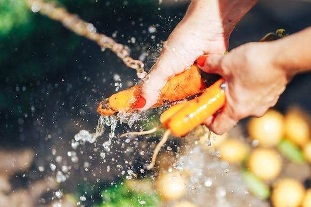 Mãos de mulher lavando um monte de cenouras sob o verão ao ar livre de água