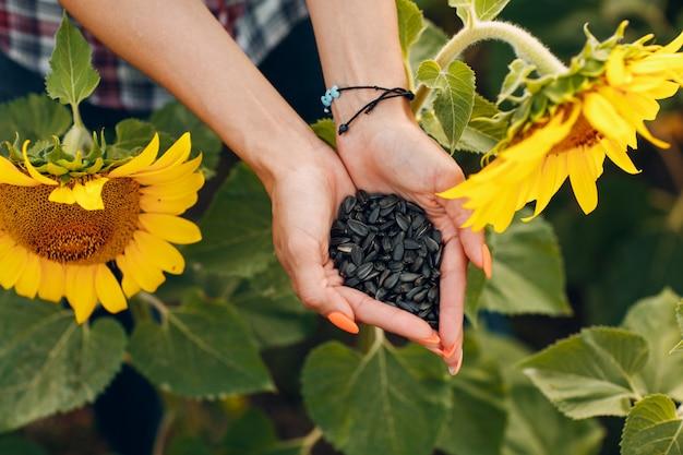 Mãos de mulher segurando sementes de girassol em um campo
