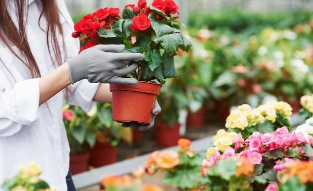 Mãos de mulher segurando um vaso com flores e cuidando dele.