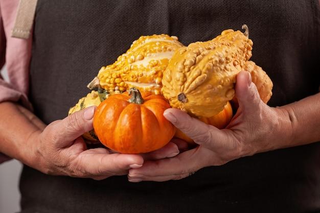 Mãos de mulher segurando uma abóbora.
