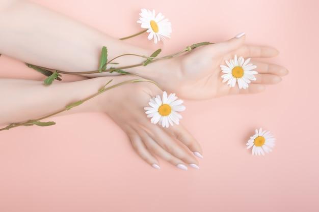 Mãos de mulheres bonitas na moda em uma posição elegante refinada em um fundo rosa com flores de camomila