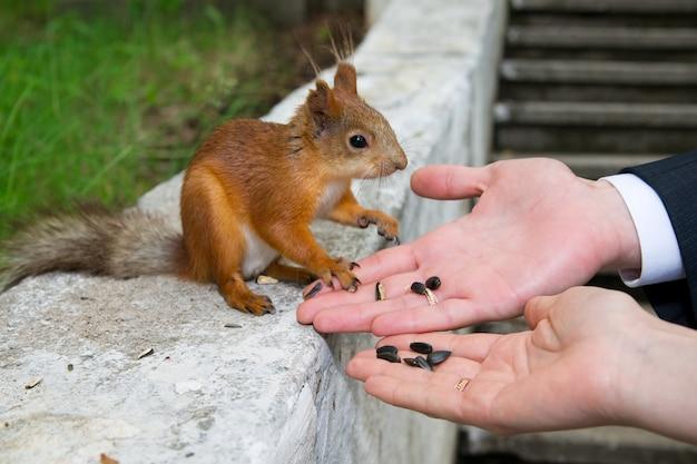 Mãos de noivo e noiva com esquilo