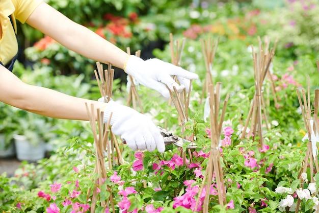 Mãos de trabalhador de centro de jardinagem em luvas de proteção podando plantas
