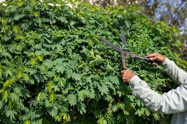 Mãos de um homem podando uma árvore com uma tesoura