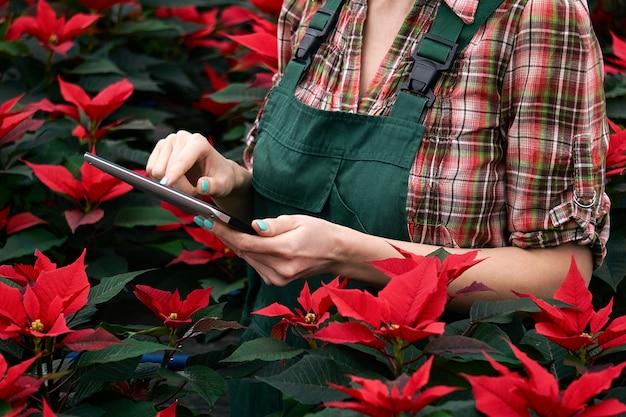 Mãos de uma agrônoma registrando o desenvolvimento da poinsétia no viveiro de plantas em um tablet