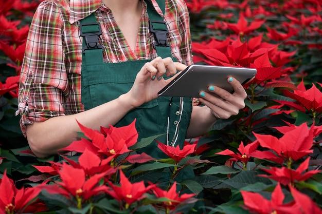 Mãos de uma engenheira agrícola registrando o crescimento de amendoim no viveiro de plantas em um tablet
