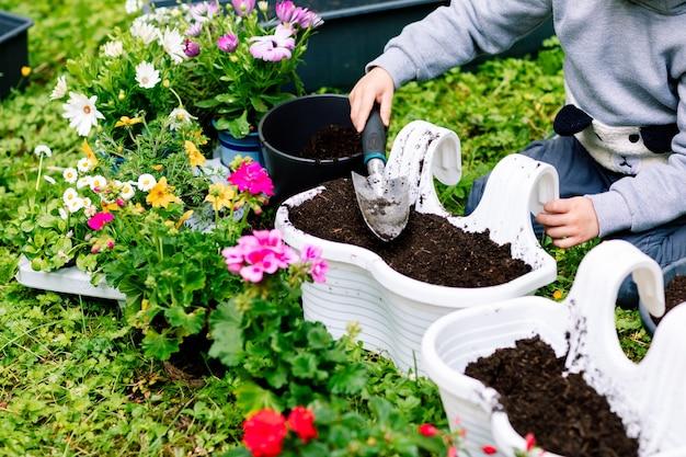 Mãos de uma menina enchendo um catre de flores com terra com uma espátula, primavera transplantando flores, cuidando de plantas.