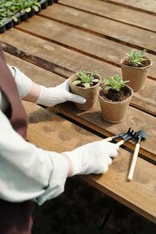 Mãos do agricultor em luvas pegando uma ferramenta manual antes de transplantar as mudas