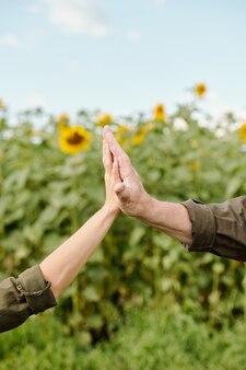 Mãos do agricultor sênior em trajes de trabalho e de sua colega madura contra o campo de girassol verde e o céu azul no dia de verão