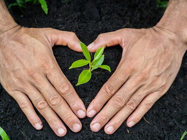 Mãos do homem que plantam a árvore no solo. conceito de plantio.