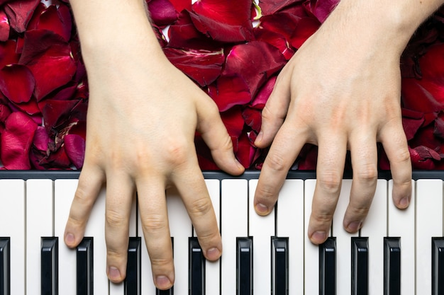 Mãos do pianista nas pétalas da flor da rosa do vermelho que jogam a serenata romântica para o dia de valentim.