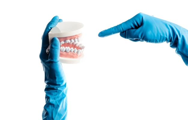 Mãos em luvas azuis segurando um modelo de dente dentário isolado no fundo branco