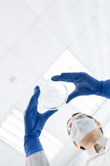 Mãos enluvadas de um jovem químico ou farmacêutico contemporâneo segurando uma placa de petri com bactérias enquanto testam uma nova vacina em laboratório
