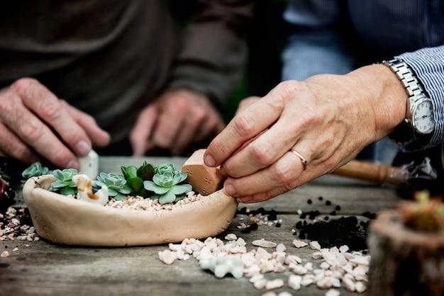 Mãos, fazendo, um, terrarium, com, miniatura, plantas