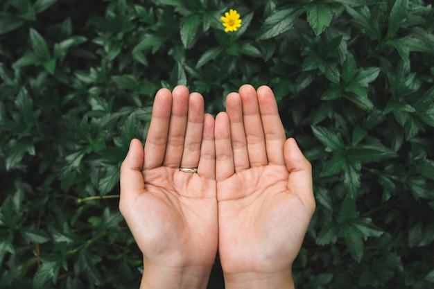 Mãos femininas com fundo de folhas verdes. conservar o meio ambiente e salvar o conceito do mundo.