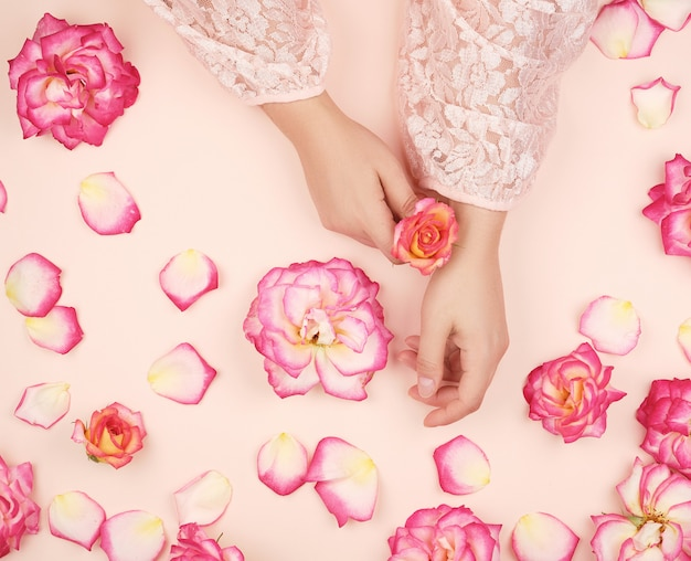 Mãos femininas com pele lisa, fundo branco com botões de rosa cor de rosa