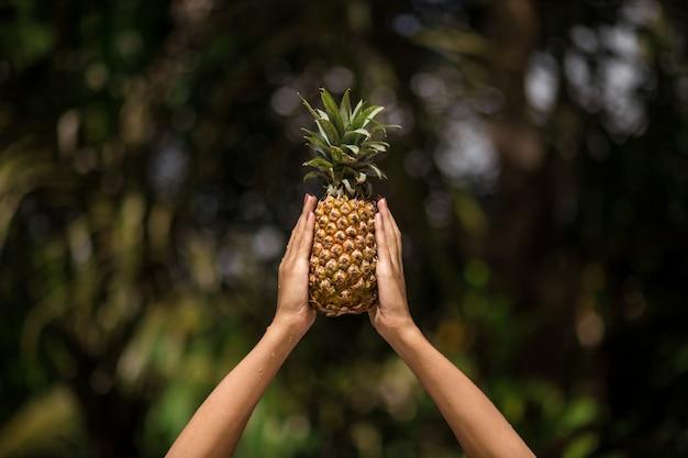 Mãos femininas detém abacaxi na selva tropical verde