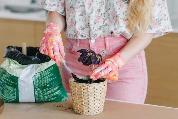 Mãos femininas em luvas rosa transplantam flores em casa em novos vasos de vime lindos.