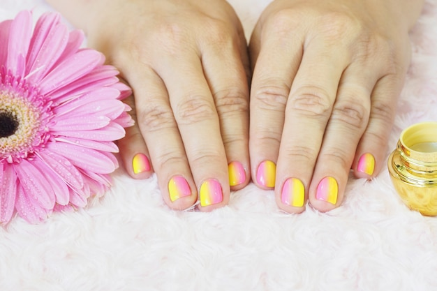 Mãos femininas fazem manicure. frascos de creme, uma lixa de unha, gerbera com gotas de água sobre um luxuoso rosa claro