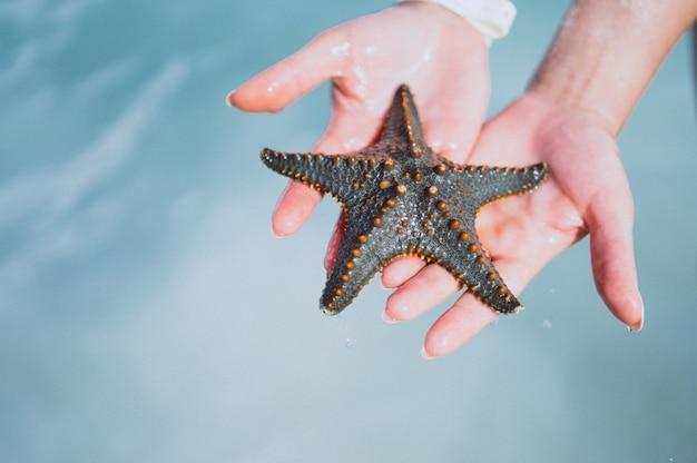 Mãos femininas fechem segurando peixe estrela