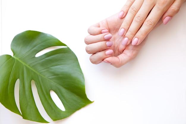 Mãos femininas manicure creme cosmético folha monstera em um fundo colorido manicure mãos